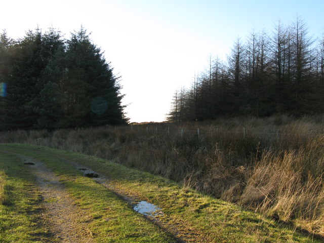 Firebreak in the plantation north of West Nichold