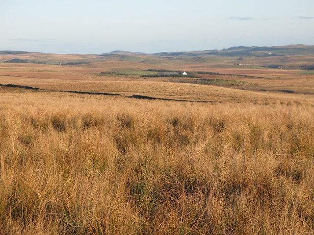 Towards Moss Peteral