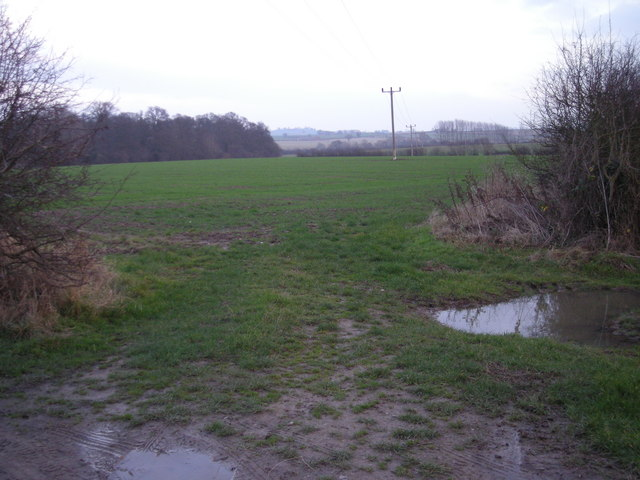 Looking towards Grotto Coppice from farm track to Lower Brompton Farm