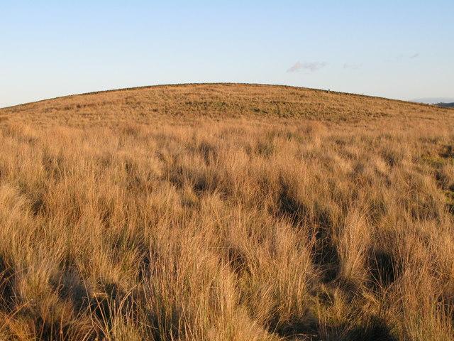 Hill 203