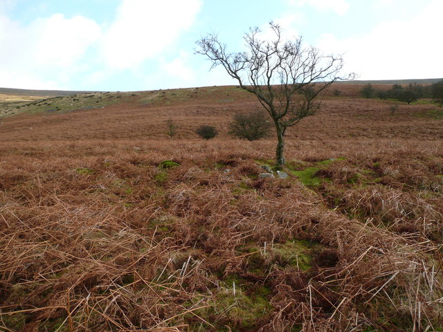 Lone tree in Cwm-gu
