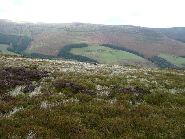 Heathery hillside