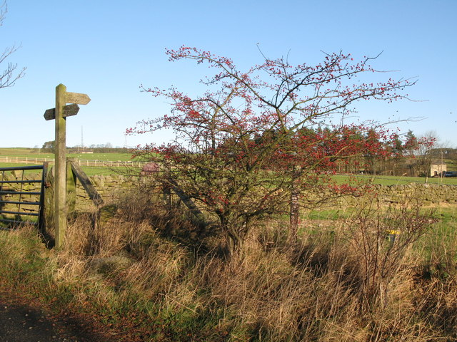Footpath to Catton