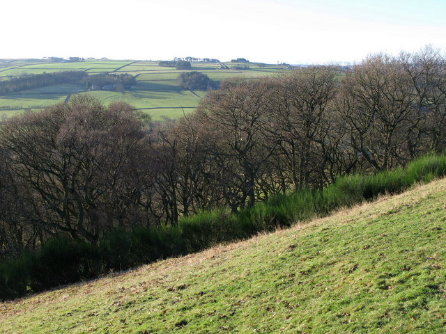 Steep pastures and woodland above the River East Allen