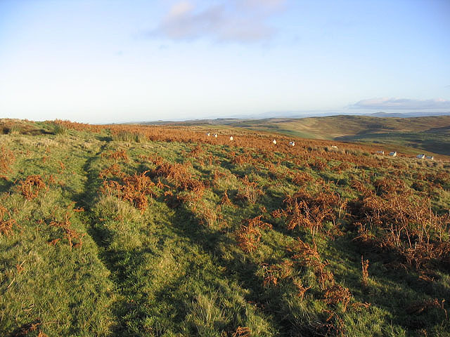 Sheep on Whitslaid Hill