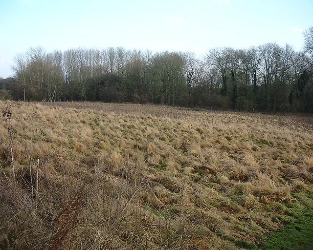 Barton Stacey -  Rough Pasture