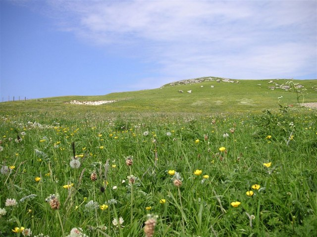 Machair,  on the headland west of Caolas, Vatersay
