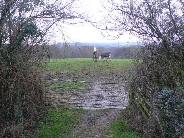 Ponies at  footpath gateway