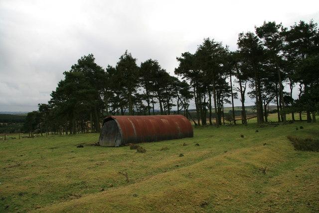 Pasture at Bryn Dadlau