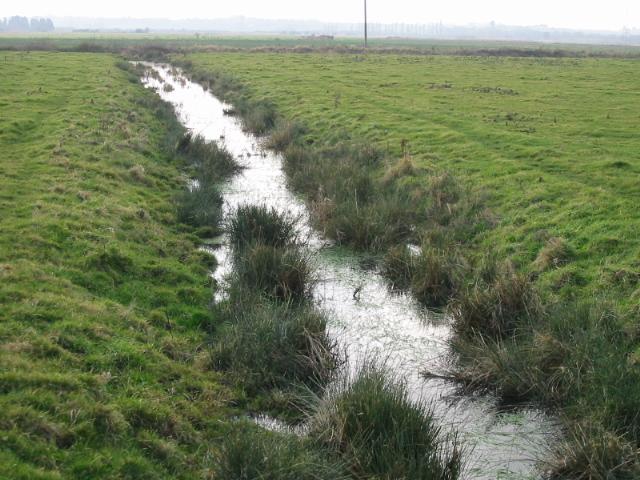Ditch draining into the Goshall Stream