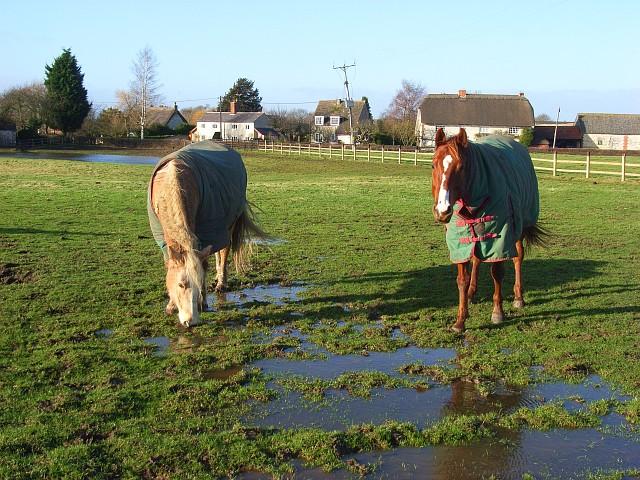 Horse, Uffington