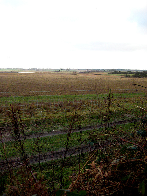 View to north-east towards River Blyth
