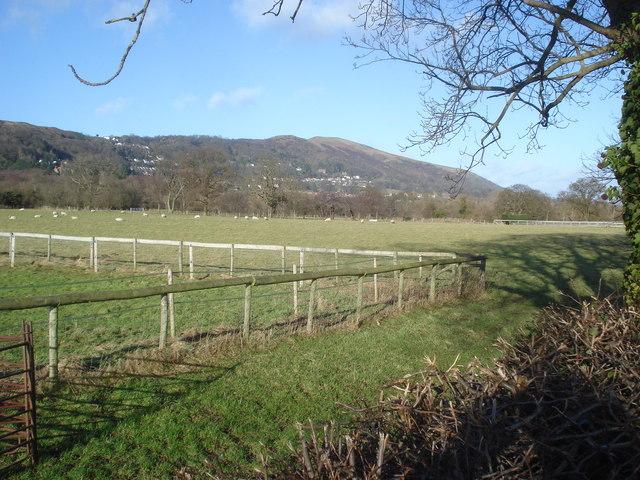 Sheep pasture near Coton Cottage Farm