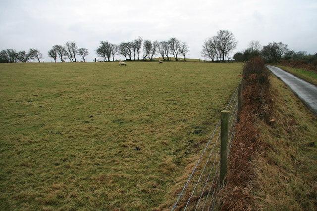 Pasture near Gwrhyd