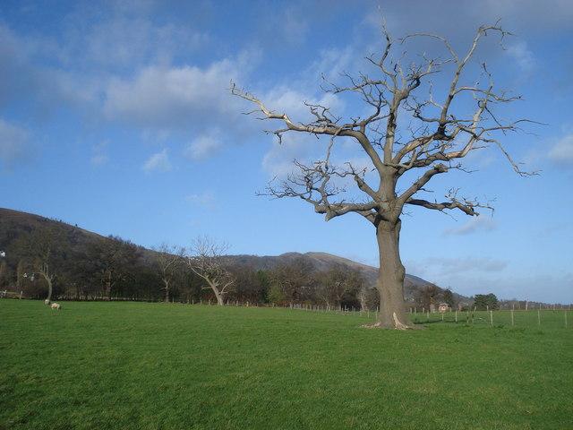Tree at Brickbarns Farm