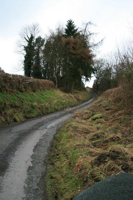 Lane near Llwyn-Madoc