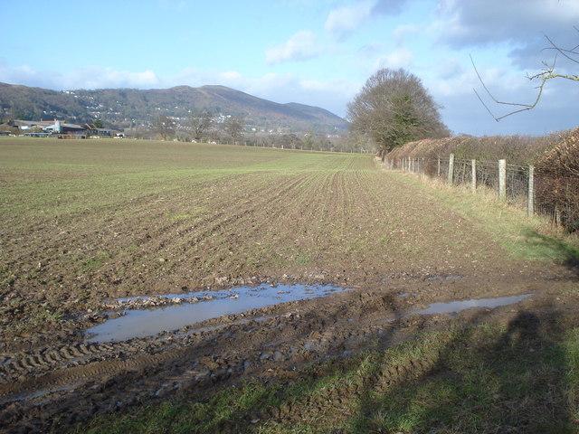 Wet field near Brickbarns Farm