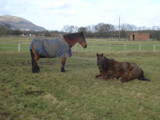 Stud farm horses