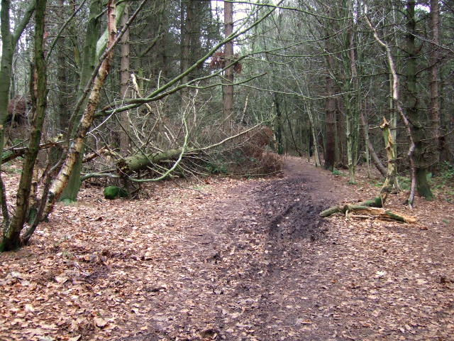 Path through Peat Pits