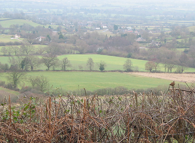 View towards Hollybed Common