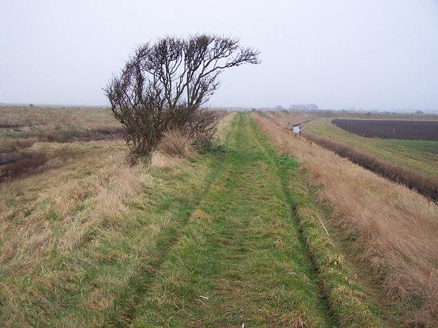 Wantsum Walk near Reculver