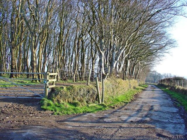 Lane to Trefigin