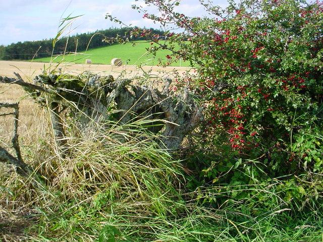 View across fields from lane near Longnewton