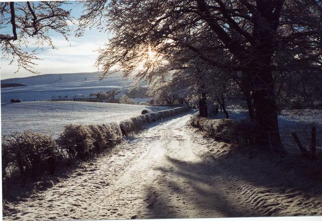 Lane looking towards Longnewton