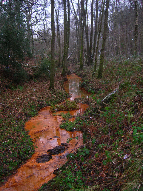 Crowborough Ghyll Tributary, Old Lodge Warren