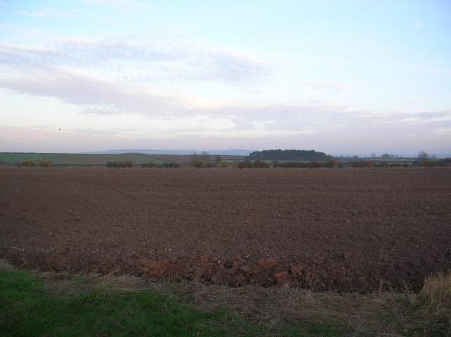 Farmland near Scrayingham