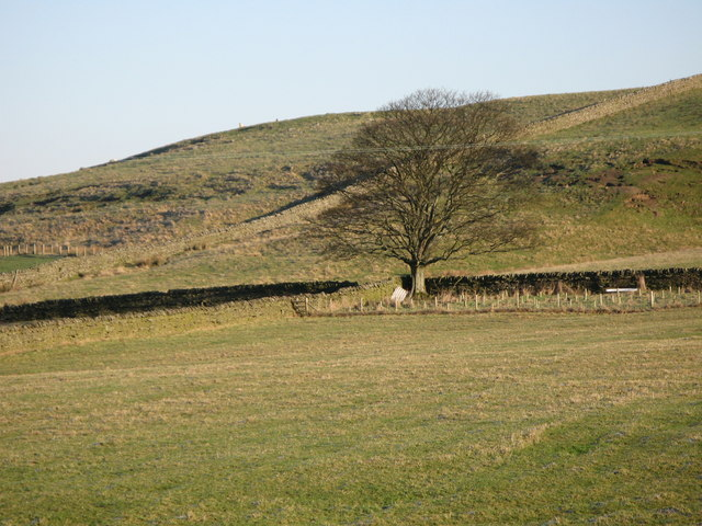 Pastures near High Struthers