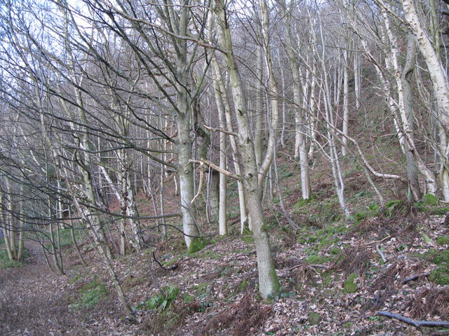 Woodland on the north bank of the River East Allen