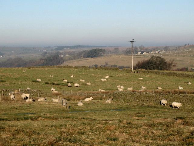 Pastures near Lonkley Head