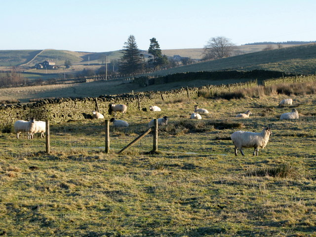 Pastures above Allendale Town