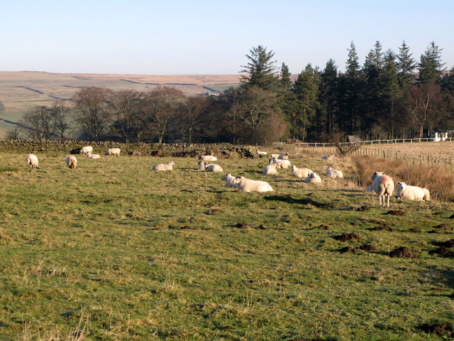 Pastures near Lonkley Head (3)