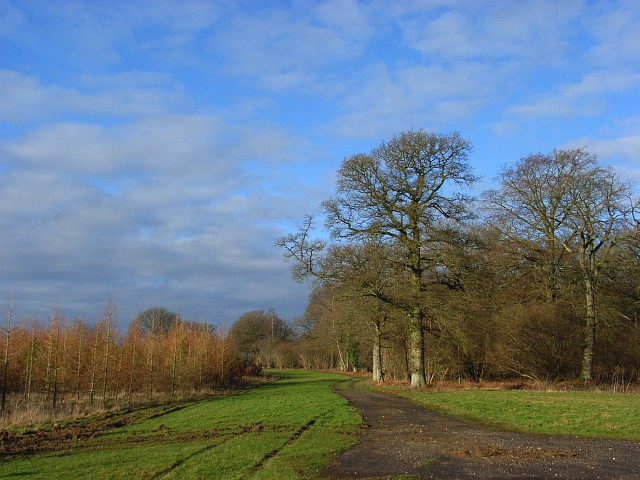 Woodland, Froxfield