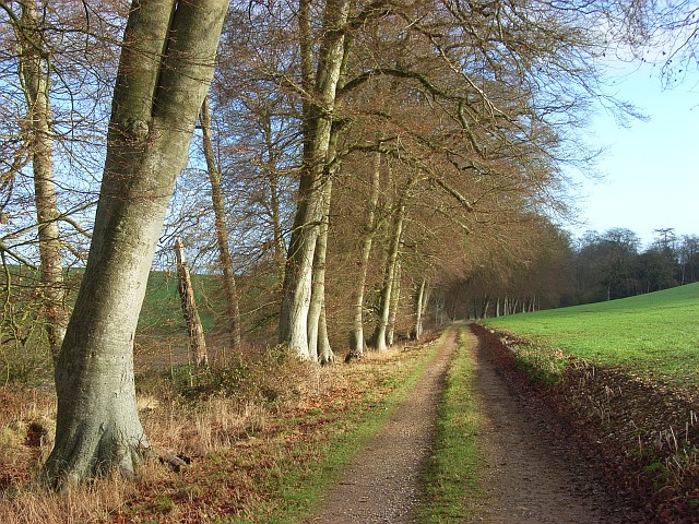 Track with beeches, Littlecote Park