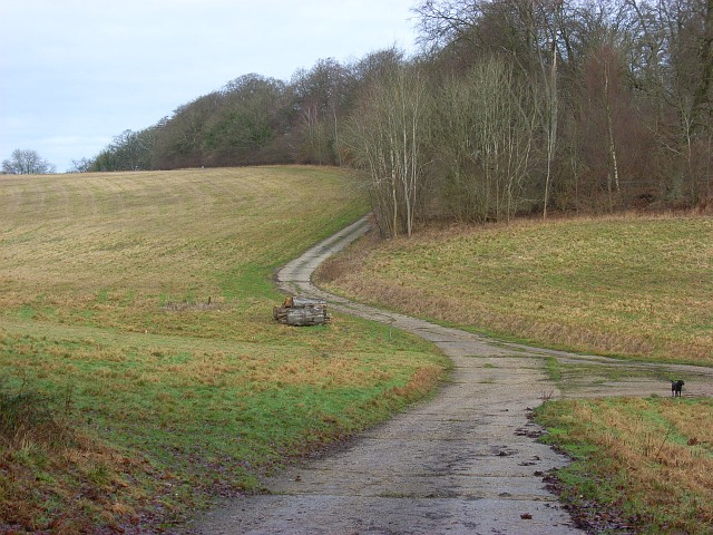 Track in woodland above Littlecote