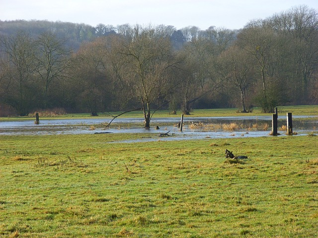 The Thames floodplain, Hurley
