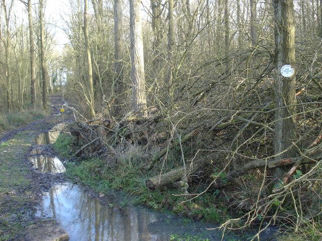 Blackmore Wood