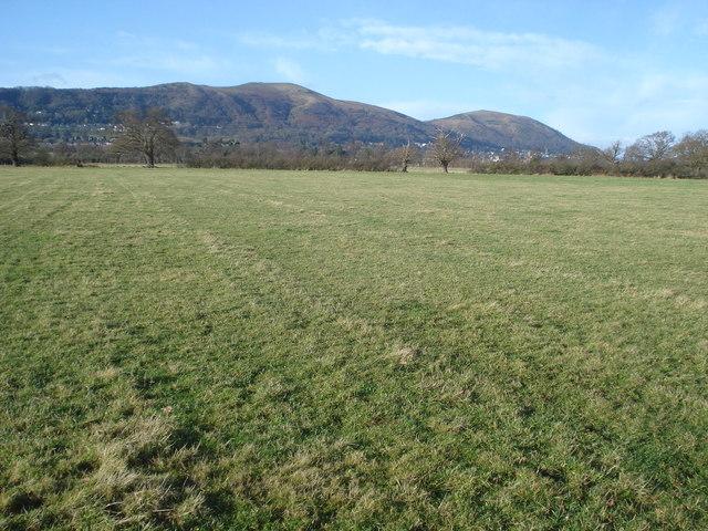 Pasture land at Blackmore Park