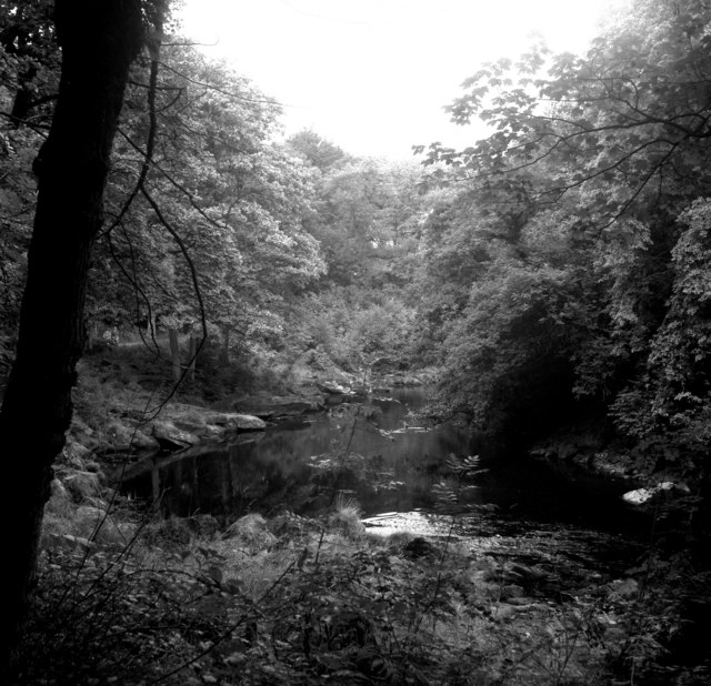 Strid Woods, Wharfedale, Yorkshire