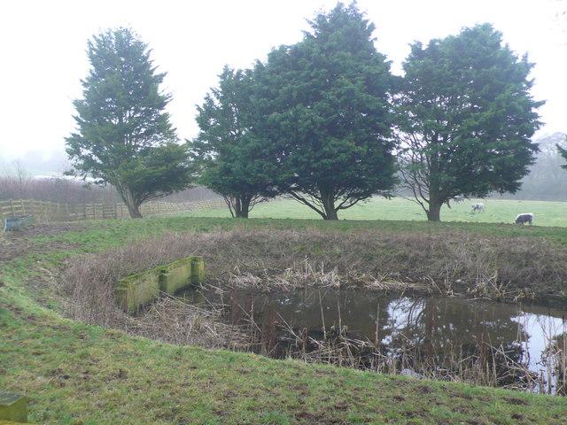 Farm pond at Up Sydling Farm