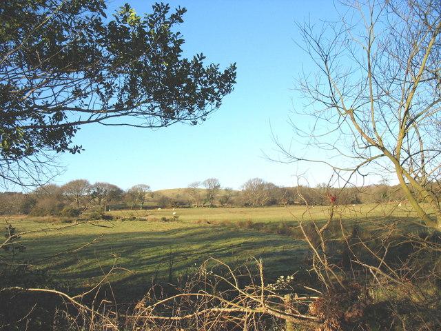 Grazing land north of Tan-y-bryn