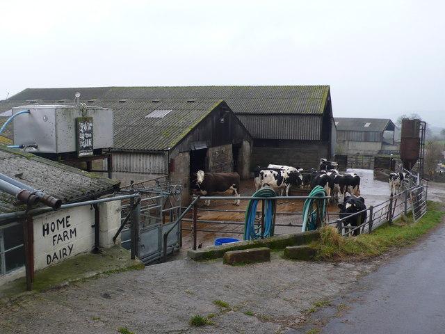 Home Farm Dairy,  near Corscombe