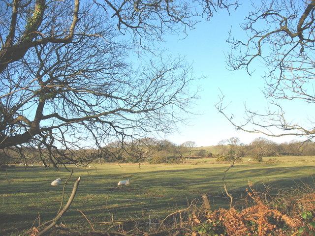 Sheep on fields west of the Gellidara road