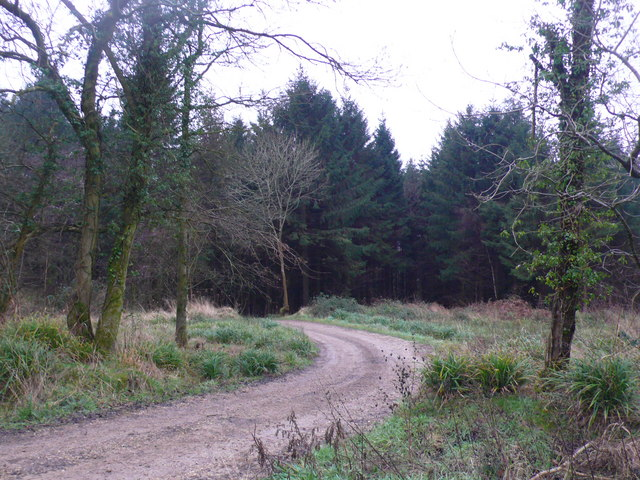 Forestry track in Chedington Woods