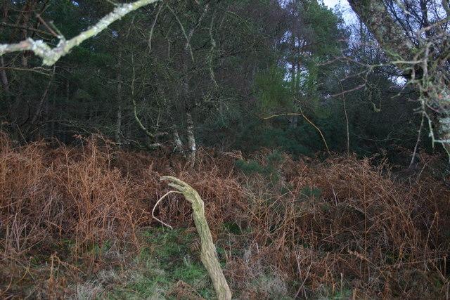Clashmore Woods
