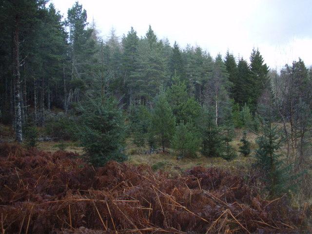 Gruids Woods