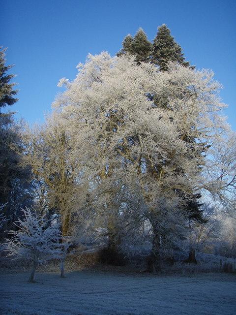 Winter trees in Achany Glen